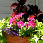 flower-box-square4