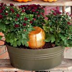 Decorative Pumpkin Watering System for Mums