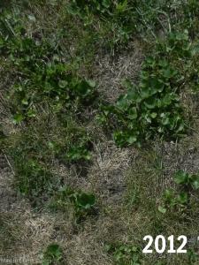 lawn last year