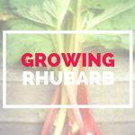GUIDE TO GROWING RHUBARB