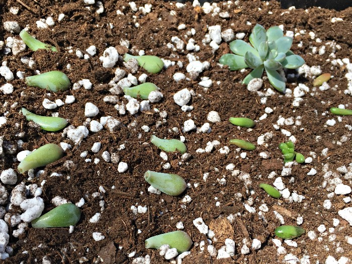 CARING FOR YOUR SUCCULENTS IN THE SPRING