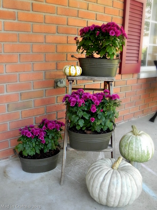 fall-mums_thumb1