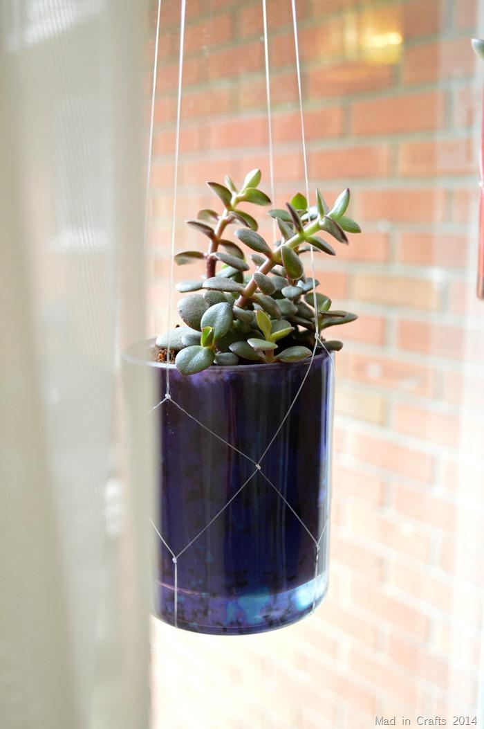 Hanging Jade Succulent