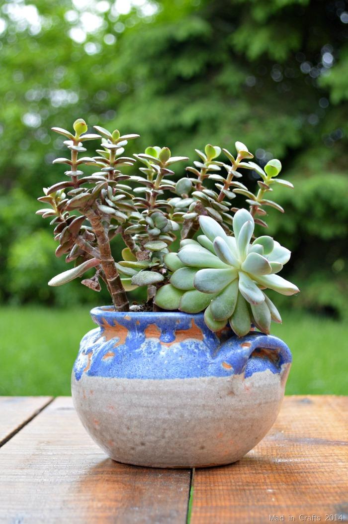 Leggy Succulents