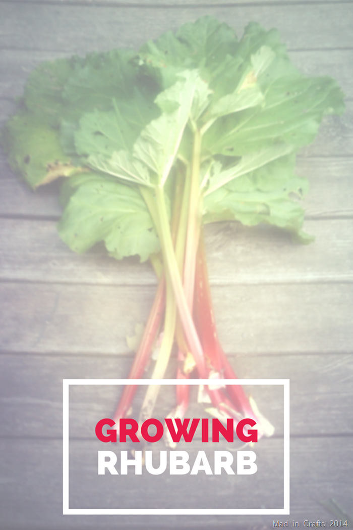 Tips and Tricks for Growing Your Own Rhubarb