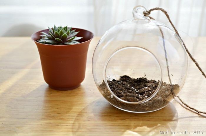 add succulent soil