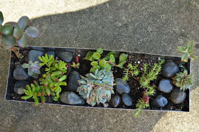 add new succulents