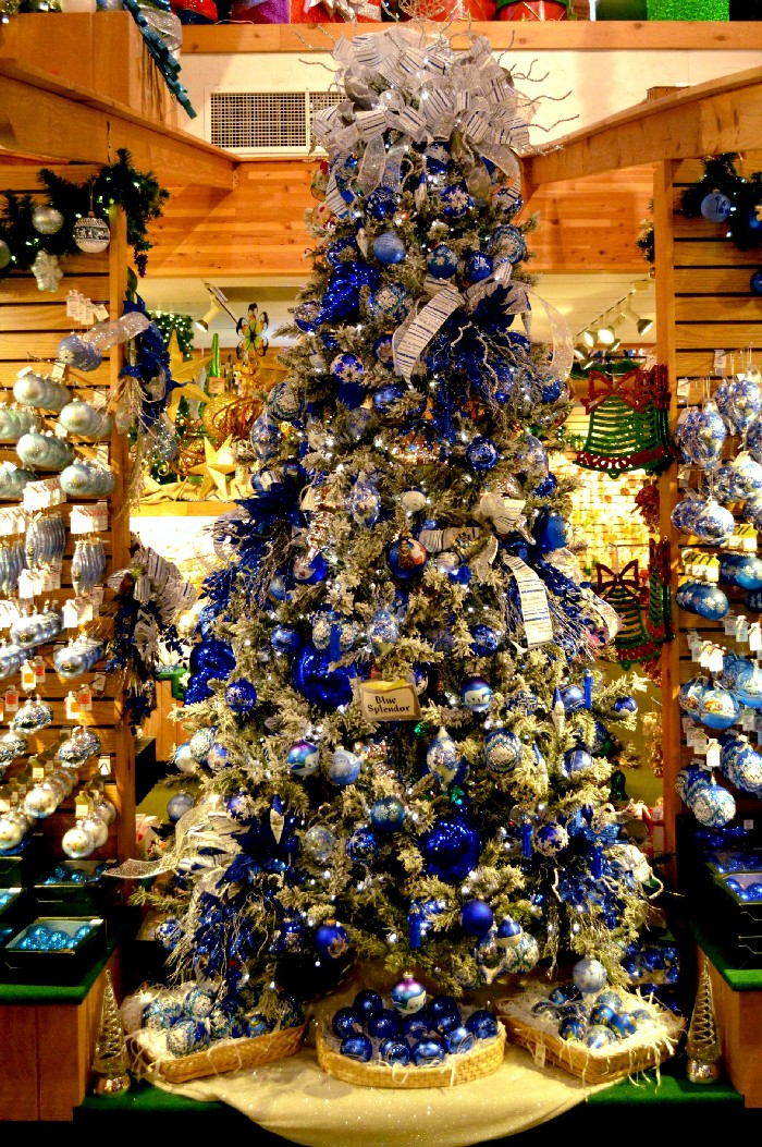 blue-splendor-tree