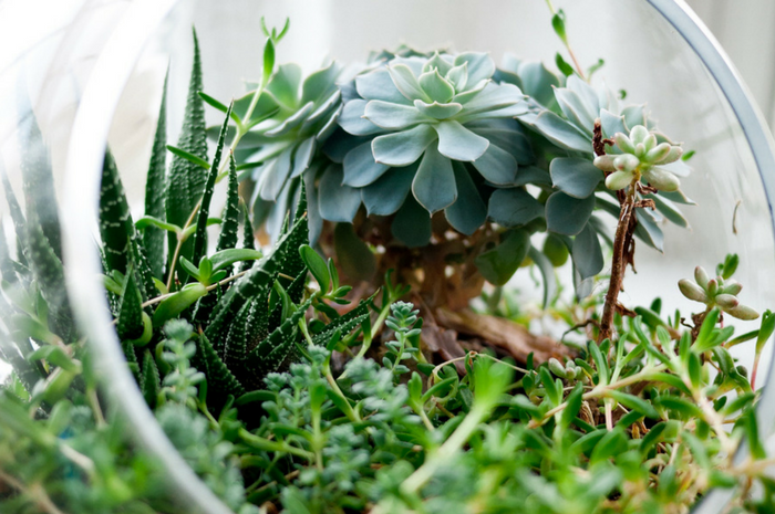 THE PROCESS OF SUCCULENT PROPAGATION