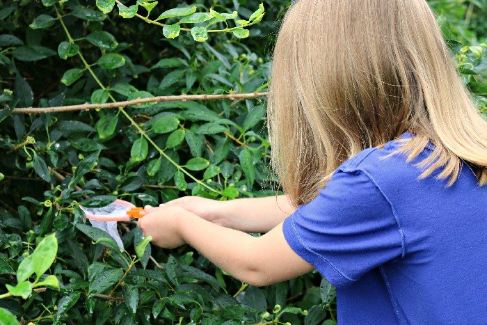 SUMMER SCAVENGER HUNTS FOR KIDS